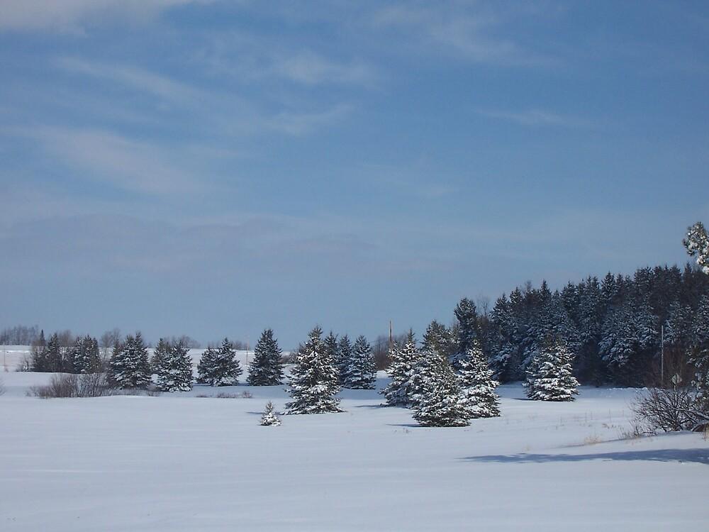 Spruce Field by Gene Cyr