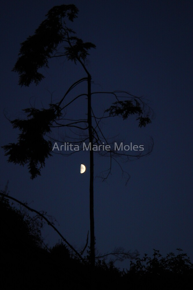 Moons Twilight by Arlita Marie Moles