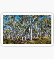 Gum Trees in Hill End Sticker