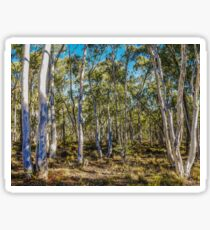 Ghost Gum Trees -  Hill End Sticker