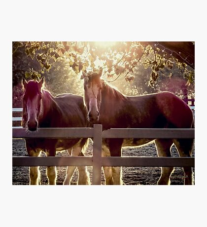 Early Morning Beauty Photographic Print
