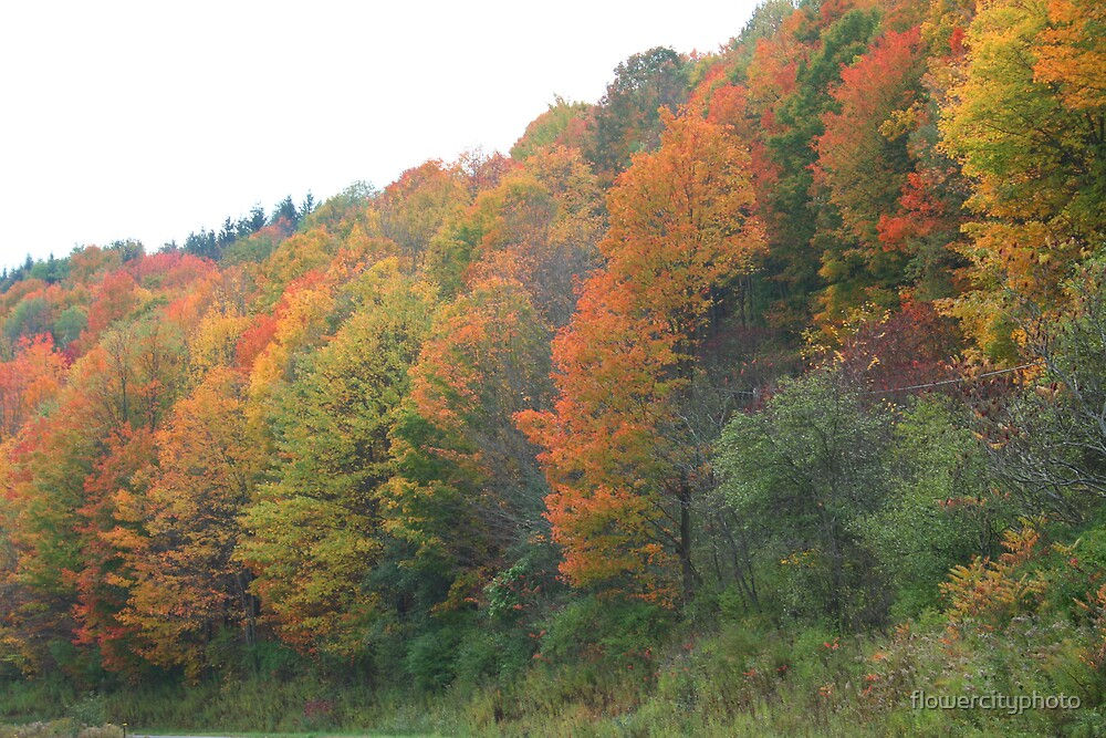 Autumn Beauty by flowercityphoto