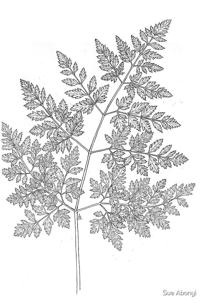 Poisonous Hemlock - Conium maculatum - leaf by Sue Abonyi