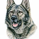 Grauer Schäferhund - Grey German Shepherd Dog by Nicole Zeug