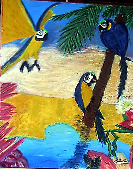 Macaws by Robyn Ferrier