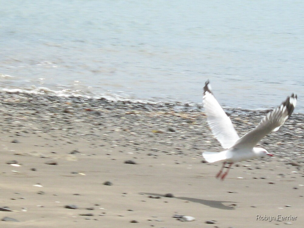 Seagull by Robyn Ferrier