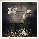 Flowers by ADMarshall