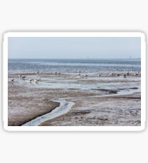 expanse of seagulls on the beach by the sea Sticker