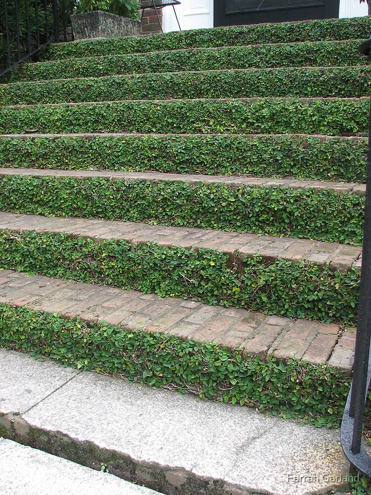 Ivy stairs 2 by Farrah Garland