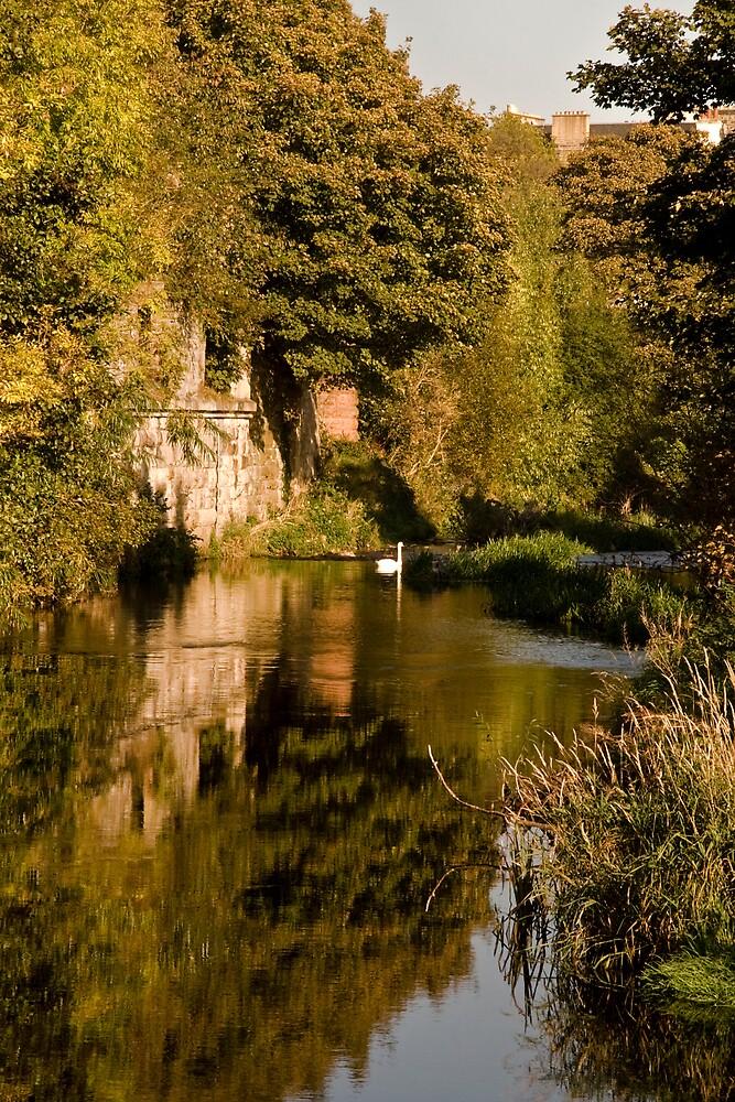 Autumn Gold II by Chris Clark