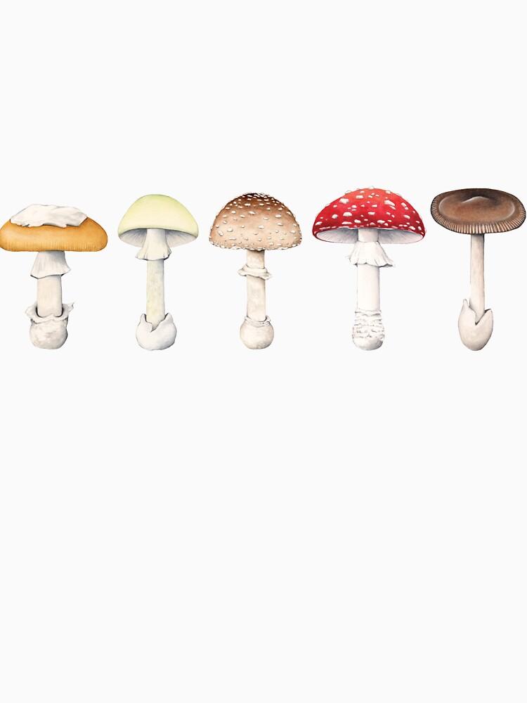 Amanita Mushrooms by lifescience