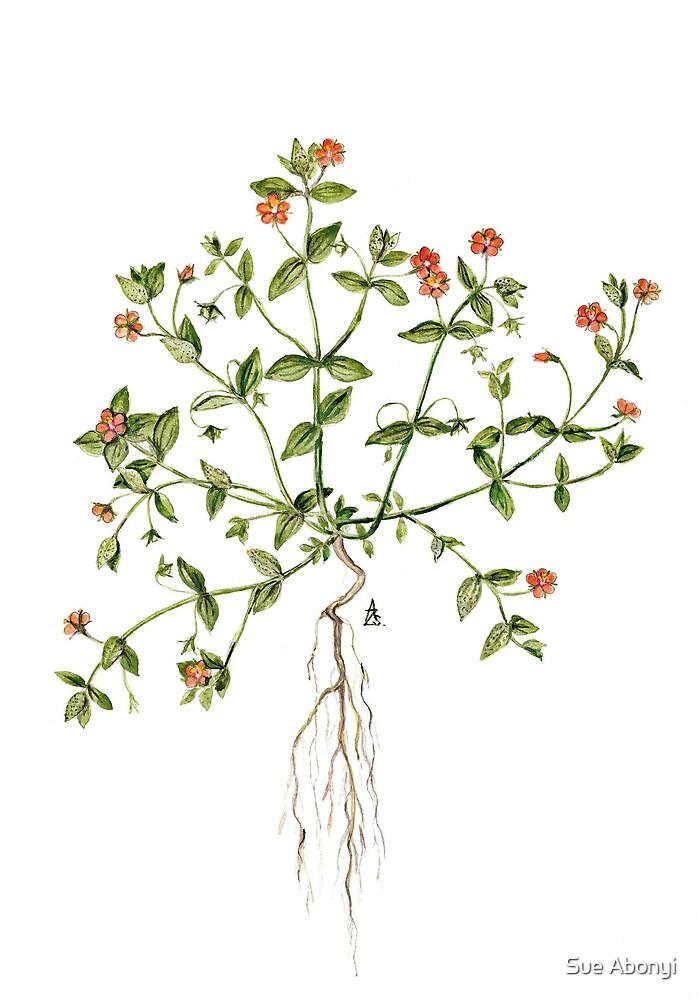 Scarlet Pimpernel - Anagallis arvensis by Sue Abonyi
