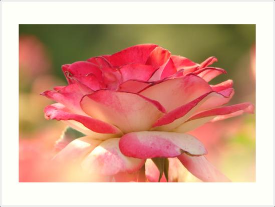 Pretty in pink flower by Emily Harney