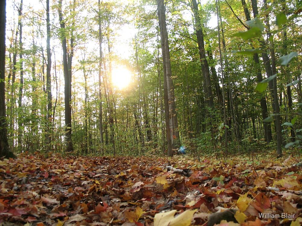 Autumn Forest 2 by William Blair