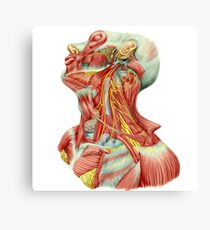 Detailed dissection view of human neck. Canvas Print
