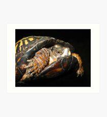 A Timid Turtle Art Print