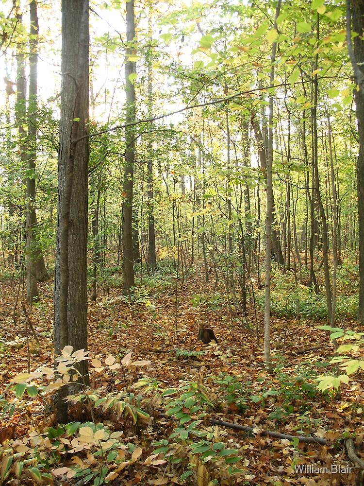 Fallen Leaves by William Blair