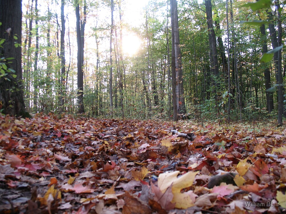 Fallen Leaves 3 by William Blair