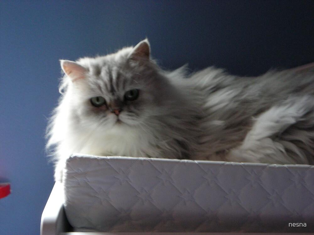 Missy Kitty by nesna