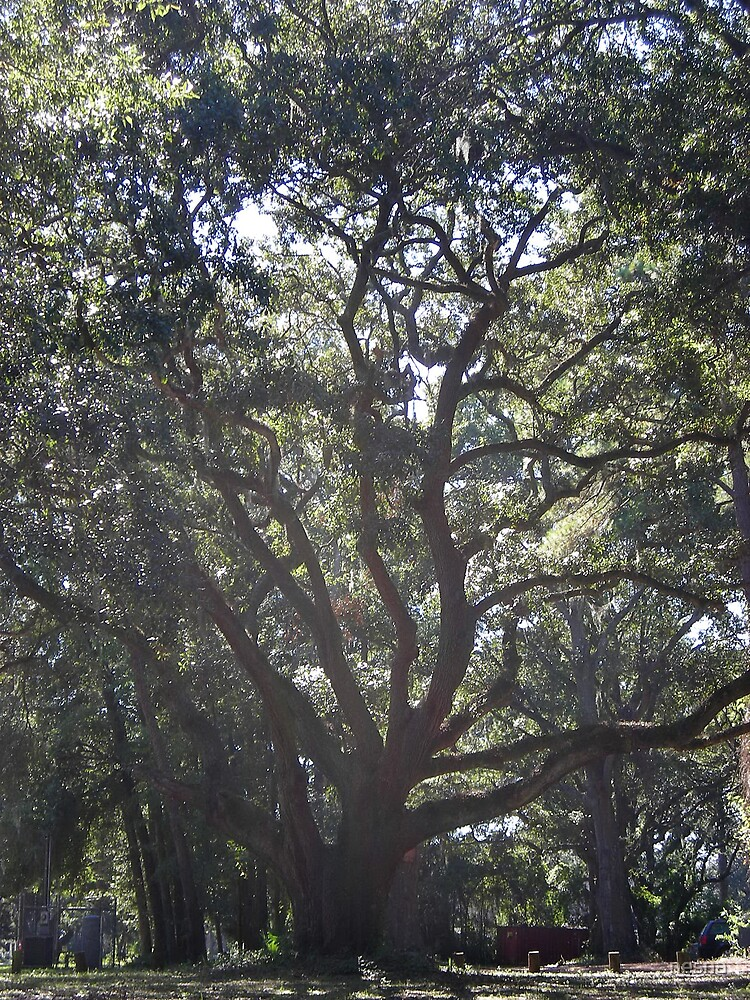 Live Oak by nesna