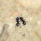 Ants in soft focus by Valeria Lee