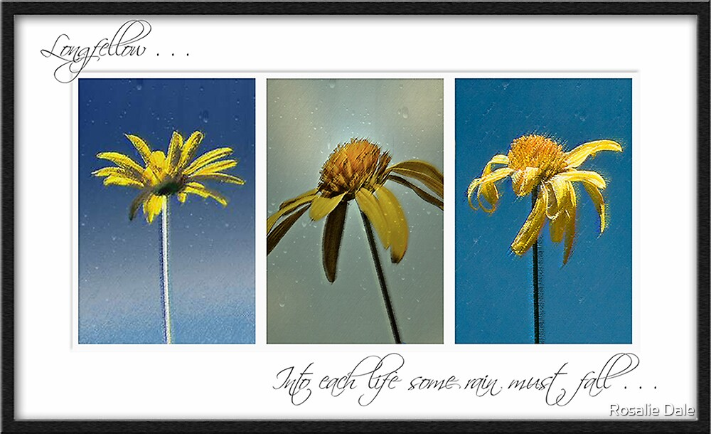 Into each life . . . by Rosalie Dale