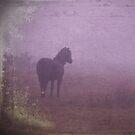 Dartmoor mist by Mitch  McFarlane