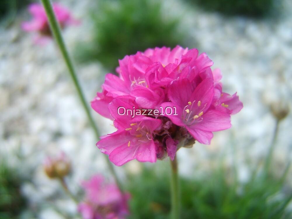 Fleur rose by Onjazze101