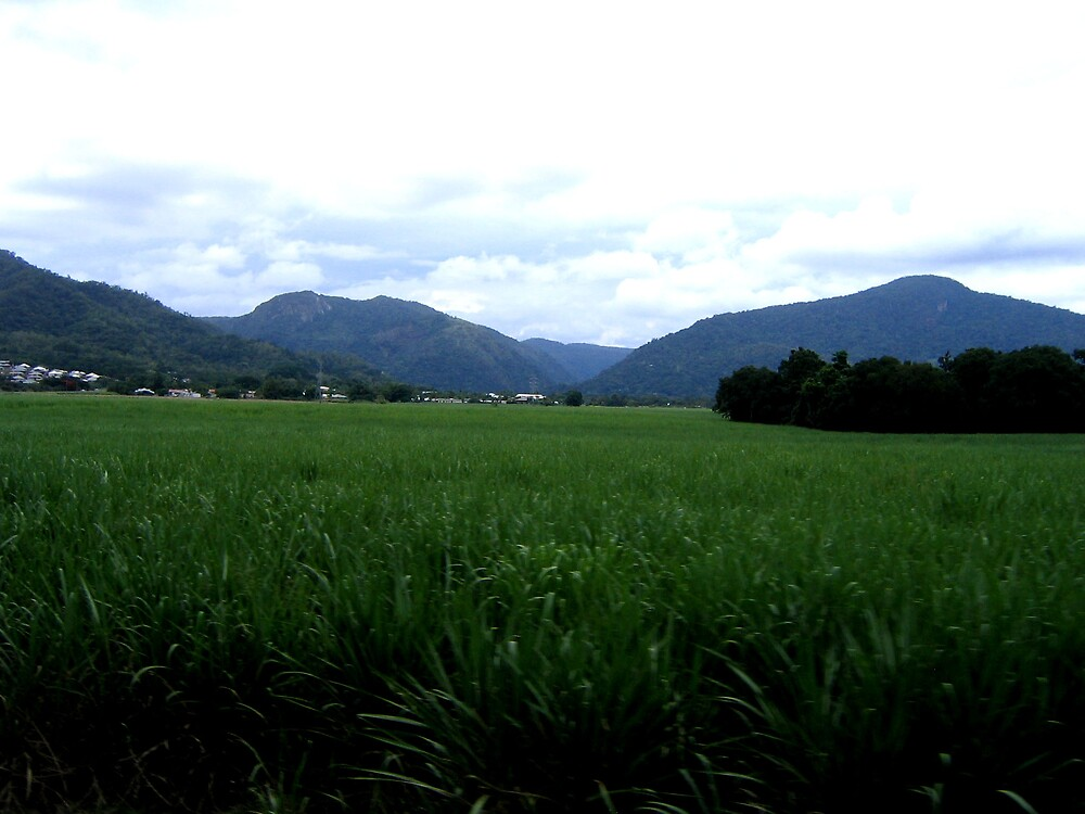 Cairns Country by Rhapsody