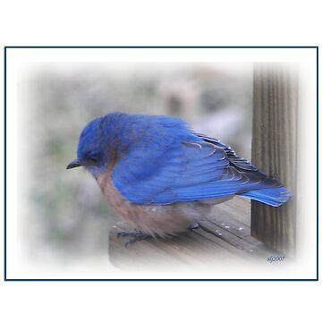 My Bluebird of Happiness by budrfli