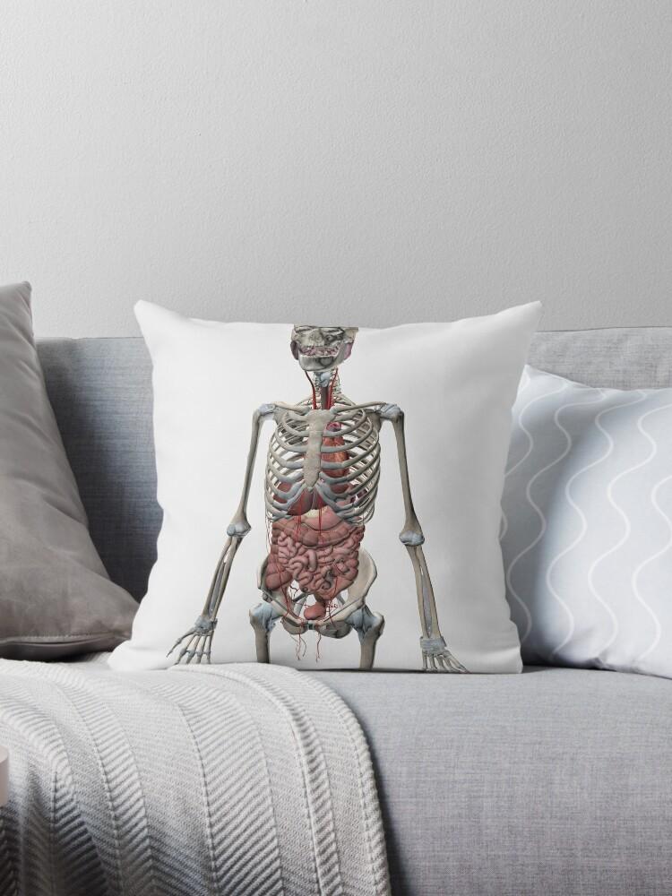 Cojines «Sistema esquelético humano con órganos del sistema ...