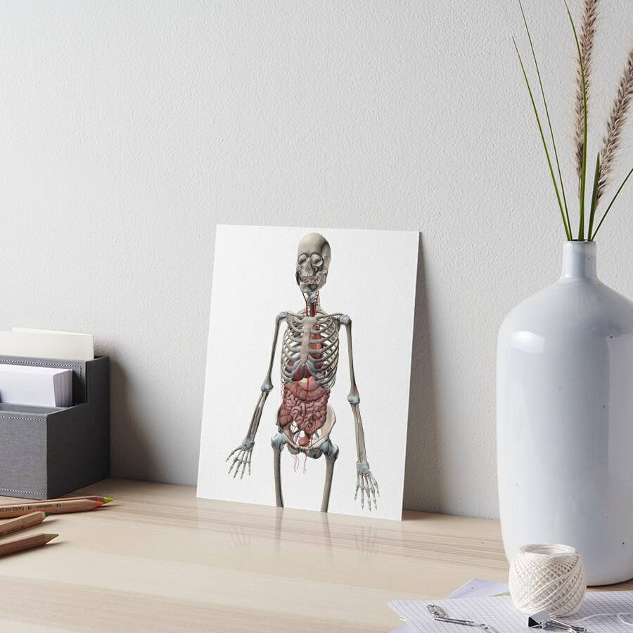 Láminas de exposición «Sistema esquelético humano con órganos del ...