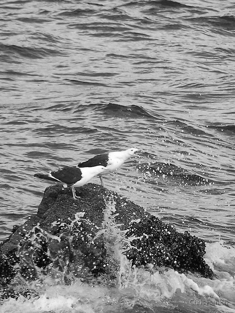 Seagulls on a Rock by Chris Hanlon