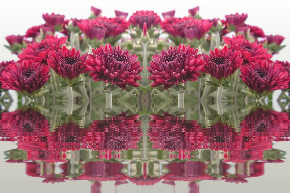 Mirrored Mums by Kurt Hawkins