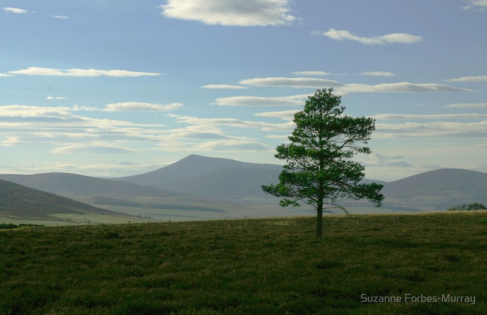 lonesome tree by Suzanne Forbes-Murray