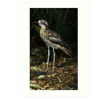 Bush thick knee. Art Print