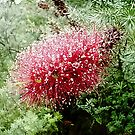 Bottle Brush by Nathan  Johnson