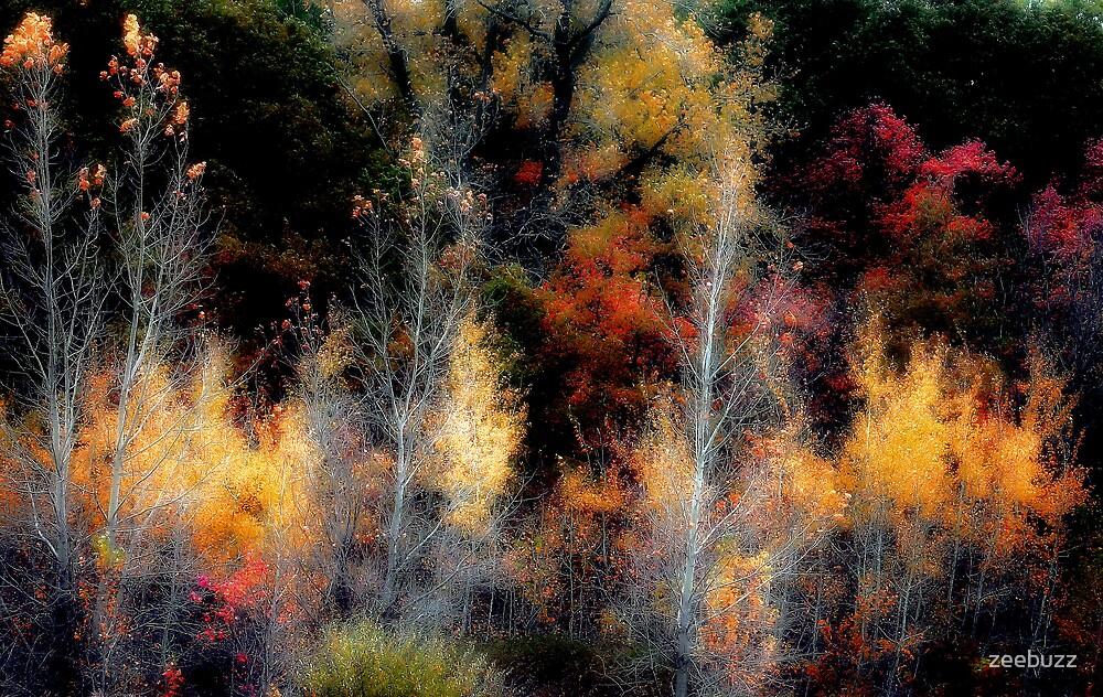 Trees by zeebuzz