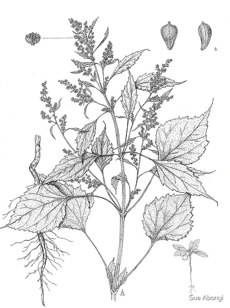 Marsh Elder - Iva xanthifolia by Sue Abonyi