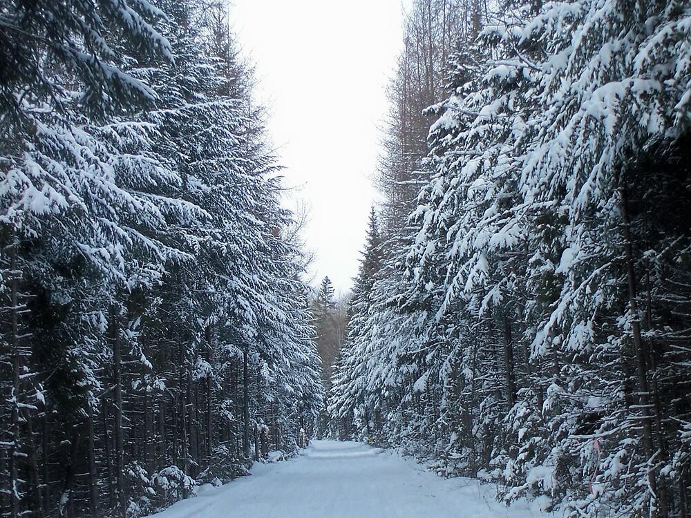 Winter Trail 2 by Gene Cyr