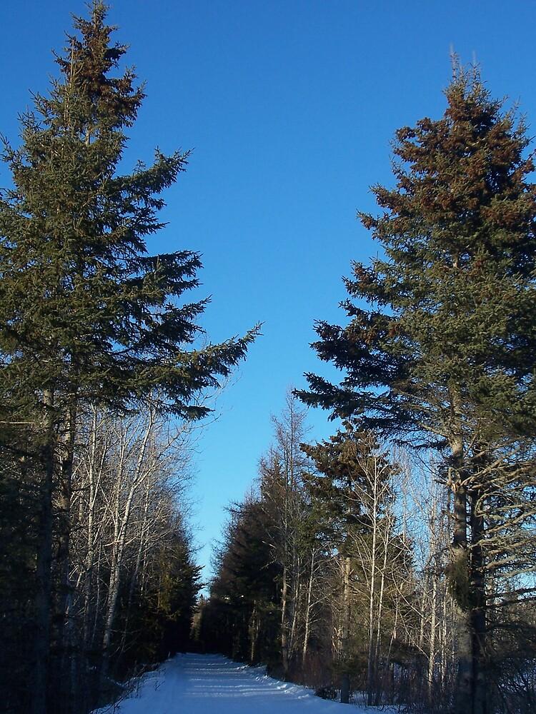 Winter Trail 4 by Gene Cyr