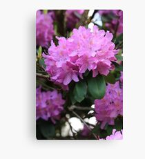 Rhododendron Beauty Canvas Print