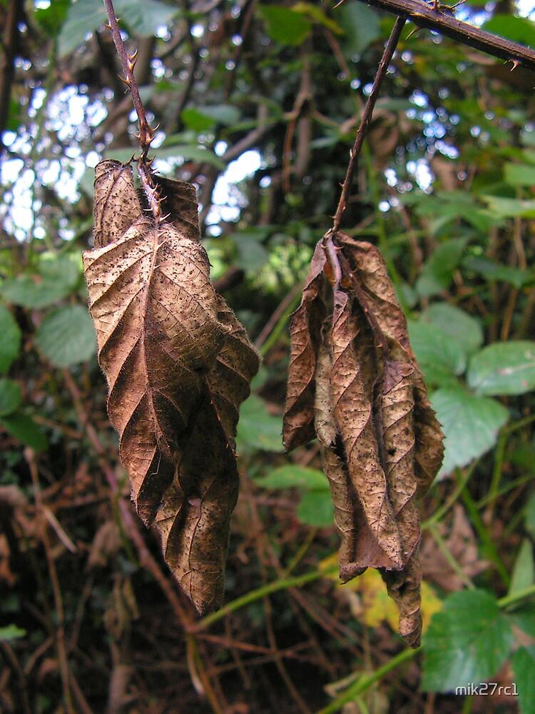 dried bramble leaf by mik27rc1