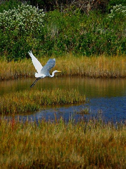Take Flight by David Linkenauger