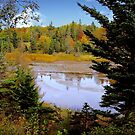 Acadia color by Nancy Richard