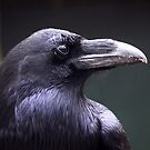 Portrait Common Raven by Jo Nijenhuis