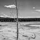 Deadly Solitude by John  Kapusta