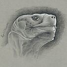 Galapagos Tortoise by April Neander
