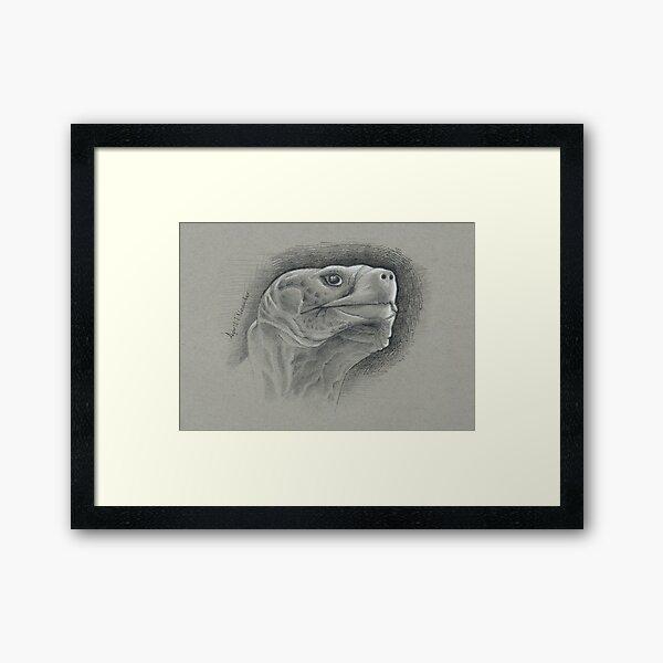 Galapagos Tortoise Framed Art Print