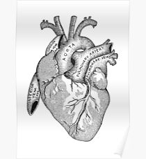 Study of the Heart Poster
